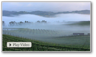 Video: In The Vineyard